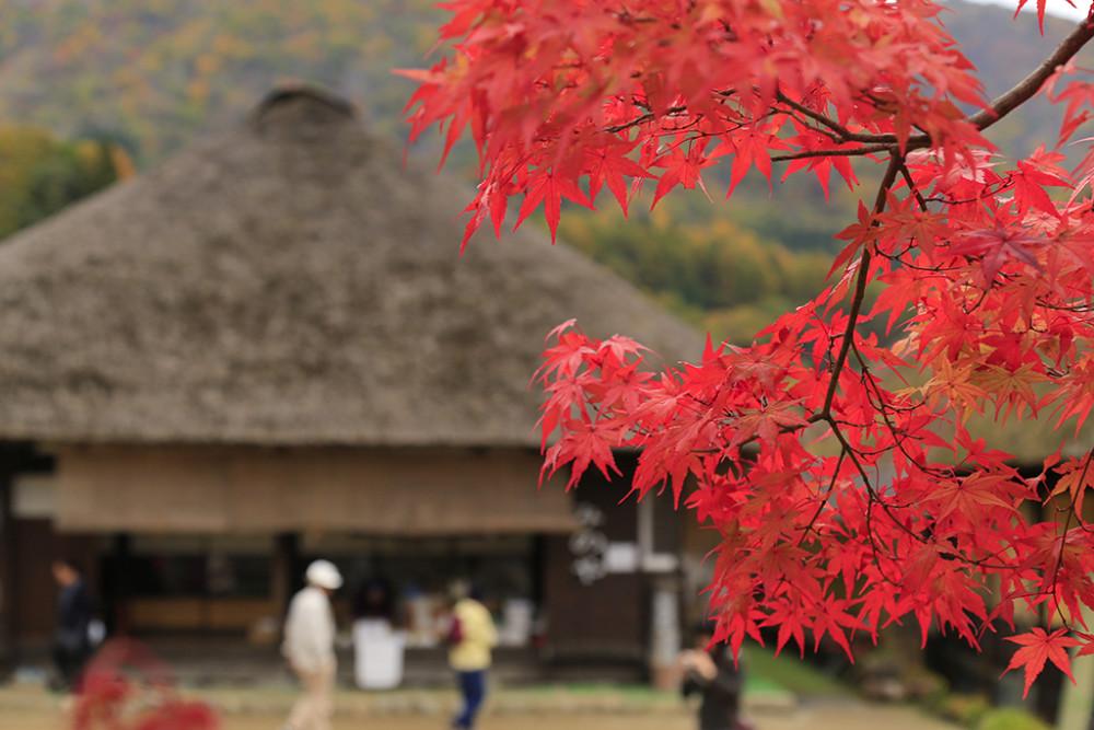 大内宿の紅葉