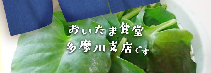 宮古島から山形県へ。ミネラル・ビタミン戦士『元気菜』