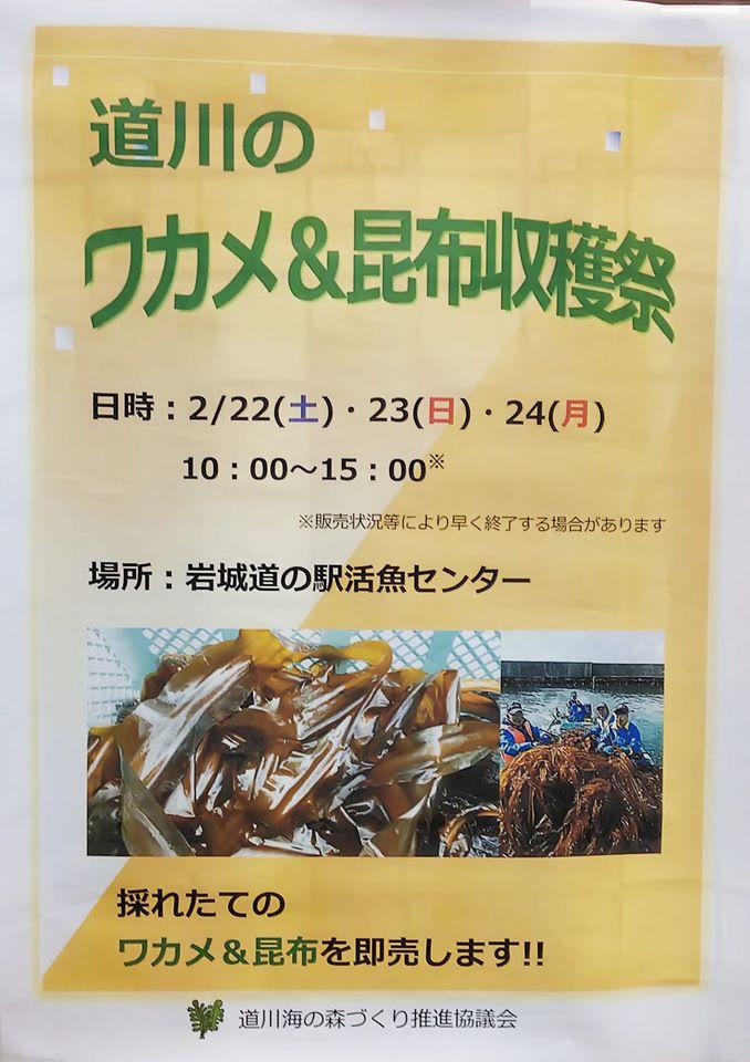 道川のワカメ&昆布収穫祭