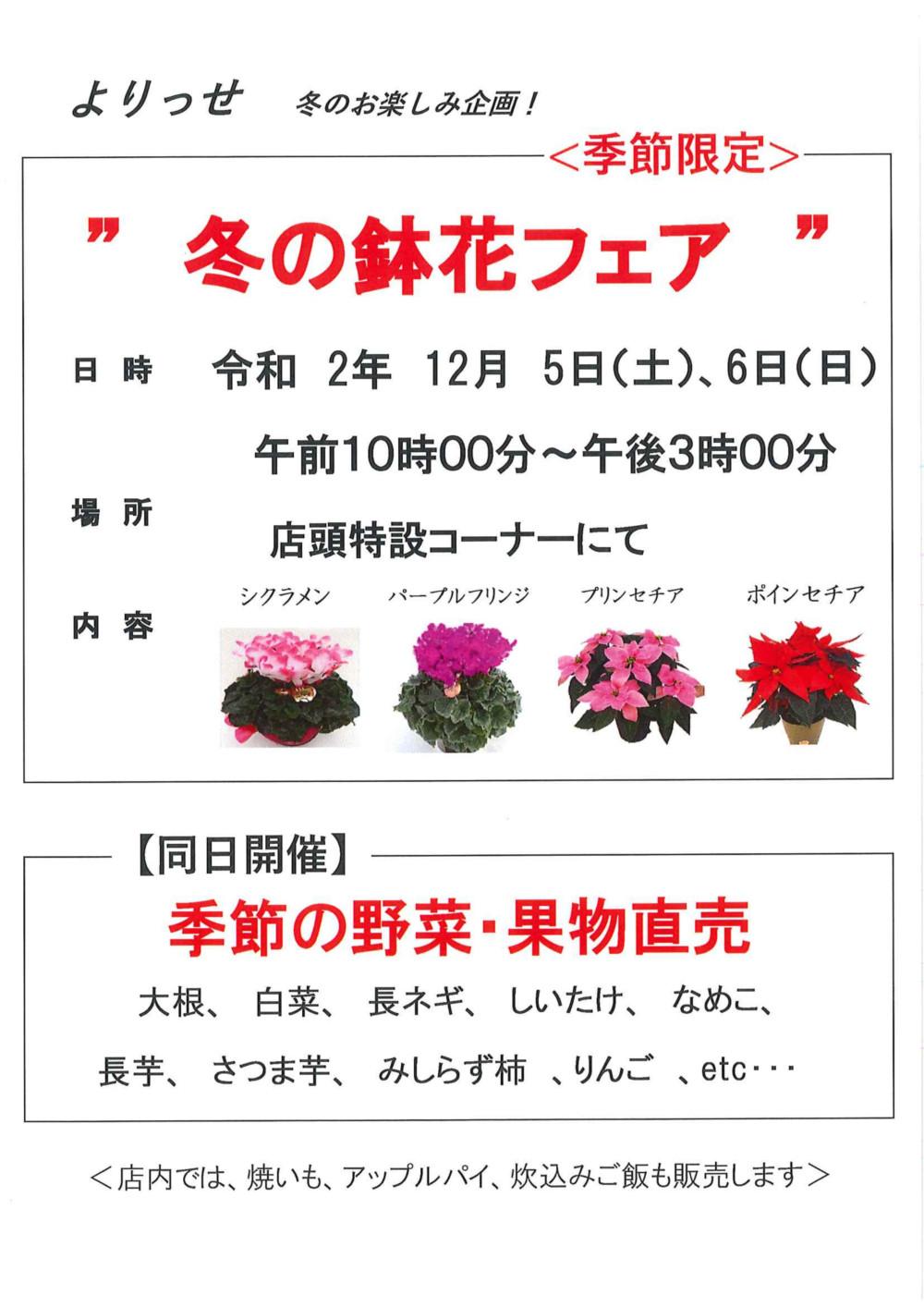 道の駅にしあいづ 冬の花鉢フェア