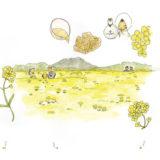 【立夏】いわて暮らしの季節暦【菜の花が見頃】
