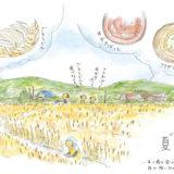 【夏至】いわて暮らしの季節暦【目にもまぶしい小麦畑】
